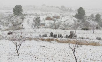 2017-01-19 nevada Jumilla (2)